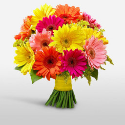 12 Mixed Gerberas