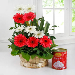 6 red and 3 white gerberas in abasket with 1kg rasgulla