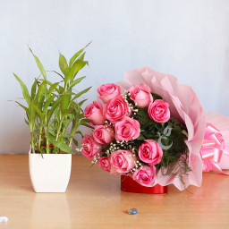 Combo of 12 Pink roses with 2 Layer Lucky Bamboo Plant