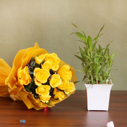 Combo Gift  of 12 yellow Roses  with Bambo Plant
