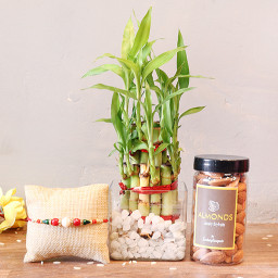 2 Layer Lucky bamboo, 1 Rakhi, 200 gm Almonds