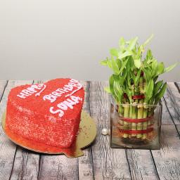 Half Kg Red Velvet Cake with Lucky Bamboo Plant