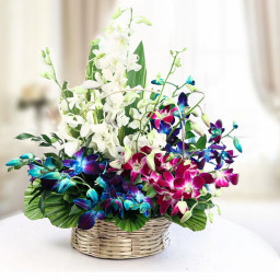 12 Mix Orchids in Basket Arrangement