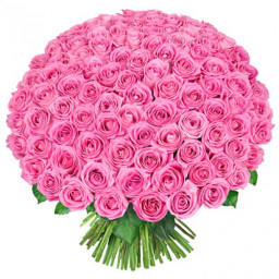 1000 Pink Roses