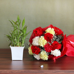 Combo of 12 Mix Carnations with Lucky Bamboo Plant