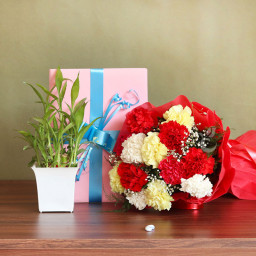 Combo of 12 Mix Carnations with Lucky Bamboo Plant and 1 Greeting Card