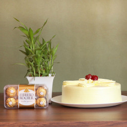 Combo of Half Kg Butterscotch Cake with 16 Ferrero Rocher and 1 Lucky Bamboo Plant