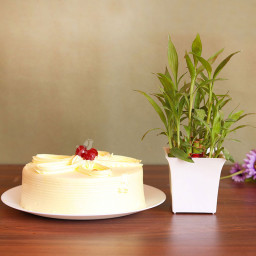 Combo of 1 Lucky Bamboo Plant and Half Kg Butterscotch Cake